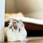 Pericolele din casa la care poate fi expusa pisica ta