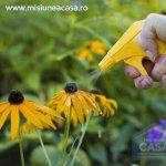 Pesticidele (Partea I): Ce optiuni alternative avem?