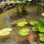 Plante care nu trebuie sa lipseasca din iazul tau