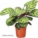 Plante care purifica aerul, alegerea optima pentru locuinte