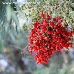 Plante care purifica aerul din camera