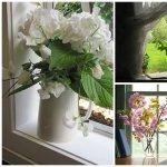 Plante care te ajuta sa ai un climat mai sanatos in casa
