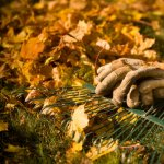 Pregatirea de toamna a gradinii (I) – 5 pasi importanti inaintea iernii
