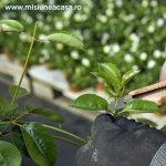 Rarirea plantelor lemnoase la debutul primaverii