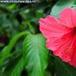 Trucuri pentru ingrijirea florilor in luna septembrie