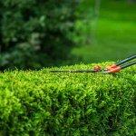 Amenajarea gradinii: sfaturi de plantare si intretinere a buxusului
