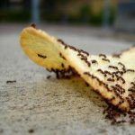 Apara-te de invazia insectelor – 6 metode de preventie si combatere