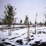 Avalon Estate - 150 de arbori au fost plantati in zonele destinate spatiilor verzi