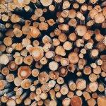 Cum se calculeaza un metru ster de lemne?