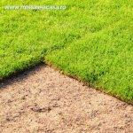 Intretinerea gradinii: operatiunile care te ajuta sa obtii un gazon perfect