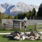 Sfaturi de amenajare a unei gradini alpine