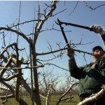 Taierile de toamna la pomii fructiferi: de ce aspecte trebuie sa tii cont