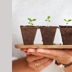 9 plante care purifica aerul din casa ta