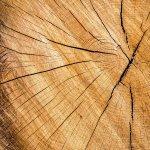 Avantajele lemnului in case