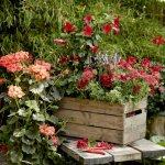 Bucuria verii pentru fiecare situatie: muscatele colorate fac viata mai frumoasa