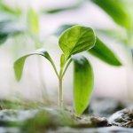 Folosirea faunei utile in combaterea biologica din culturile horticole