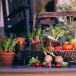 Gradina | Beneficiile ingrasamantului ecologic si a repelentului natural