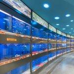 HORNBACH aduce peste 3.000 de pesti in zona de acvaristica din noul magazin din Oradea
