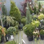 Invata sa iti decorezi gradina cu stil la EXPO FLOWERS & GARDEN