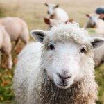 KERBL | Cresterea si ingrijirea animalelor