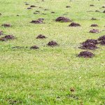 Plasa anticartite - Cum ne protejam gazonul in mod ecologic?