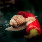 Solutii ecologice de combatere a melcilor de gradina