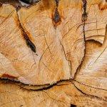Tipuri de cherestea pentru constructii - despre clasificare, umiditate, tratamente, costuri si sortimente de lemn pentru constructie I